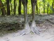 Esti állatkert Ausztrália és Madagaszkár jegyében a Szegedi Vadasparkban